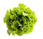Listy salátu — Stock fotografie