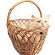 Royalty-Free Stock Photo: Cat in a basket