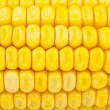 Detail of corn — Stock Photo