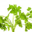 Parsley - Stockfoto