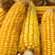 Golden corn — Stock Photo #3858643