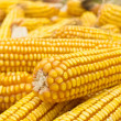 Golden corn — Stock Photo #3858656