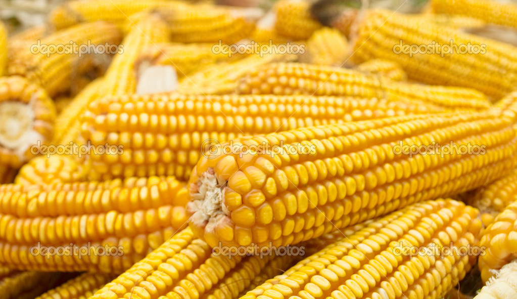 A pile of golden corn — Stock Photo #3858656