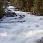 Rio de montanha. água de fluxo rápido. paisagem de verão — Foto Stock