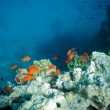 Stock Photo: Coral reef and tropical fish