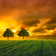 Tree in field and orange sky — Stok fotoğraf