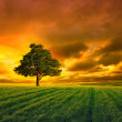 Tree in field and orange sky — Stock Photo