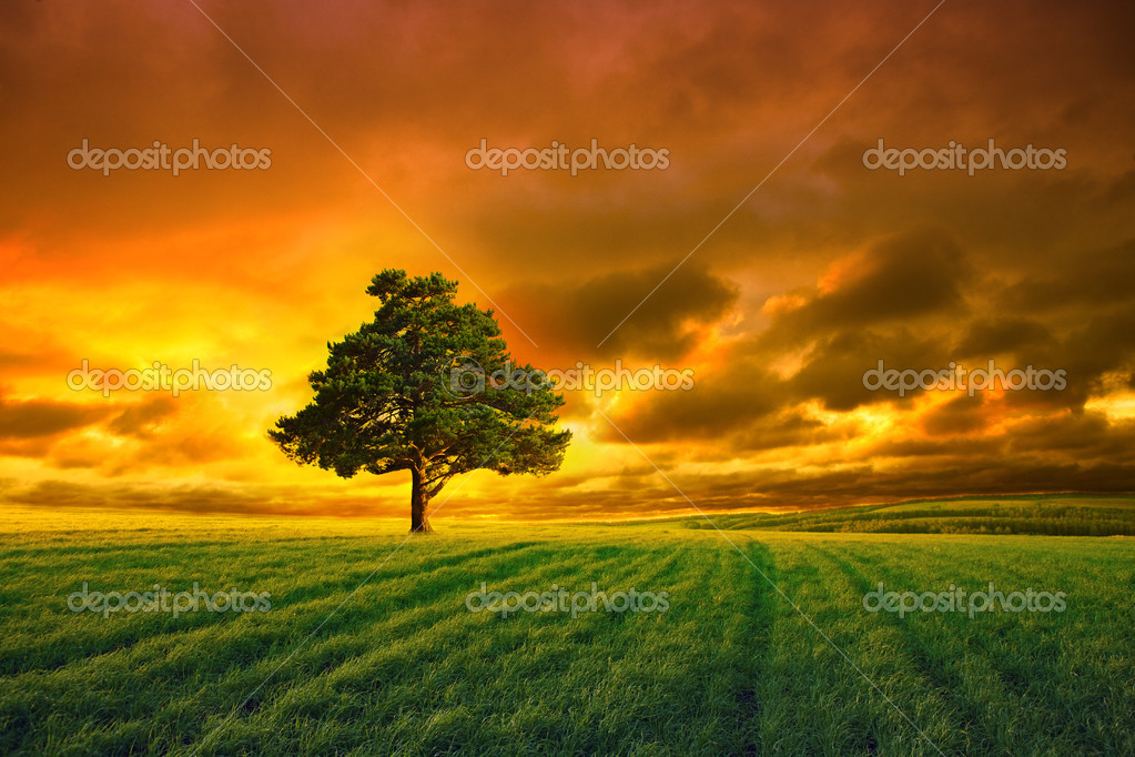 Tree in field and orange sky with clouds — Stok fotoğraf #3129770