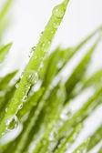 Fresh grass — Zdjęcie stockowe