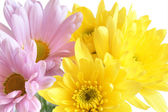 Closeup of yellow and pink flowers — Stock Photo