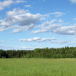 Blue sky and green field — Stock Photo #3761413