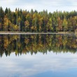Foto Stock: Beautiful forest lake in autumn day