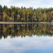 Стоковое фото: Beautiful forest lake in autumn day