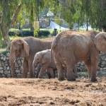 Elephant family — Stock Photo #2796656