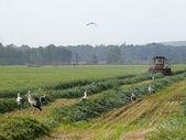 Prace w rolnictwie — Zdjęcie stockowe