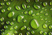 Water drops on leaf — Stock Photo