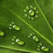 Water footprints on leaf — Stock Photo #2999192