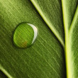 Stock Photo: Water drop on leaf