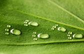 Water voetafdrukken op blad — Stockfoto