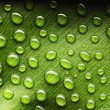 Stock Photo: Water drops on leaf