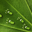 Water footprints on leaf - Stock Photo