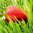 Strawberry in grass — Stock Photo