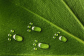 Water footprints on leaf — Stock Photo