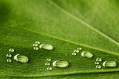 Water footprints on leaf — Stock Photo