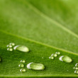 Water footprints on leaf — Stock Photo #3718062