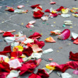 Petals on a walkway — Stock Photo