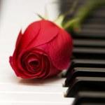 la notion romantique - rose rouge sur le piano — Photo