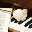 White rose over music sheets and piano — Stockfoto