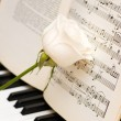 Кose over music sheets and piano — Stock Photo