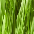 Close up of green grass — Stock Photo #2695917