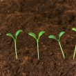 Stock Photo: New life concept - green seedlings