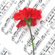 Carnation flower on musical notes — Stock Photo