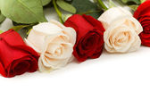 White and red roses isolated — Stock Photo