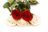 Five roses isolated on the white — Stock Photo
