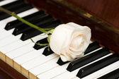 Notion romantique - rose au piano — Photo
