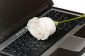 White rose on the black laptop — Stock Photo