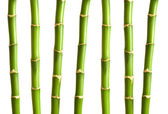Bamboo branches isolated on the white — Stock Photo