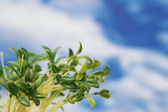Green leaves against the blue sky — Stock Photo