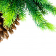 Cone and christmas tree isolated — Stock Photo #2875568