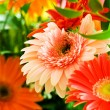 Gerbera flowers agaisnt green — Stock Photo #2876521