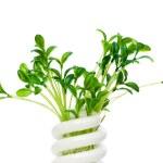 Energooszczędna Lampa z sadzonka zielony — Zdjęcie stockowe