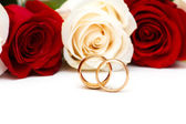 Roses and wedding rings isolated — Stok fotoğraf