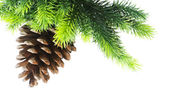 Cone and christmas tree isolated — Stok fotoğraf