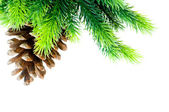 Cone and christmas tree isolated — Stock Photo