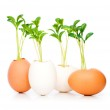New life concept with seedling — Stock Photo