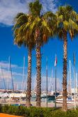 Sea sailing yachts in port — Stock Photo